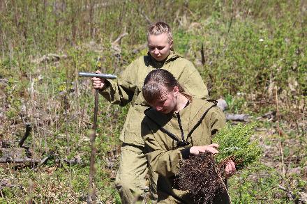 Молодые экологи высадили в Грязовецком районе 2000 деревьев