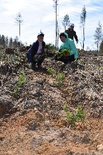 В рамках проекта «Посади лес» на территории Вологодской области высажено   более 200 000 деревьев